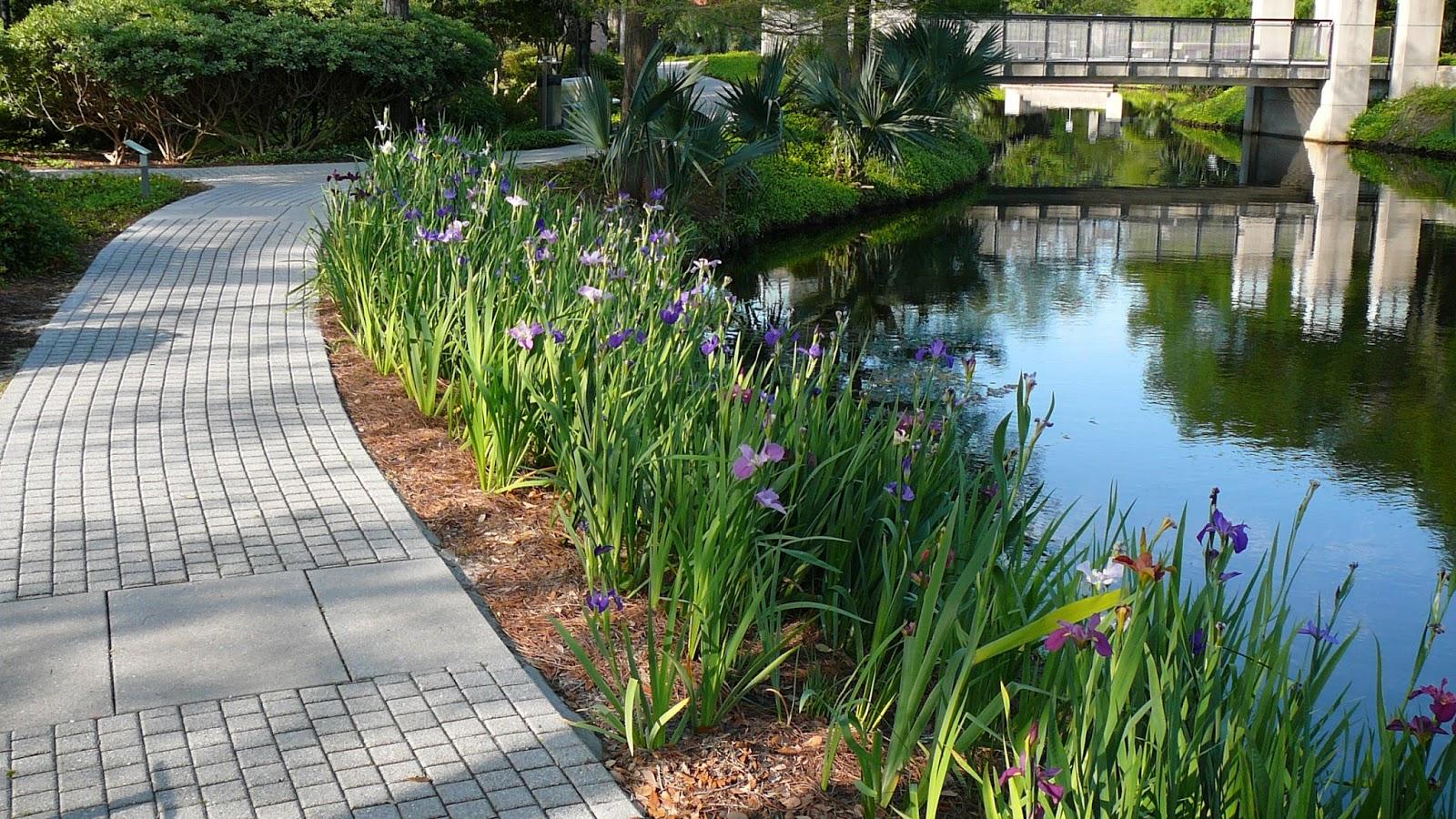 Louisiana rainbow iris festival new orleans museum of art - Sydney and walda besthoff sculpture garden ...